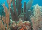 Coral reefs around the world are in decline, including those in South Florida.
